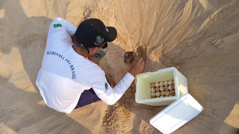 Militares apoiaram no transporte e recolhimento dos ovos