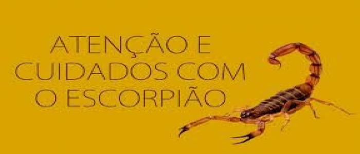 Atenção e cuidados com o escorpião