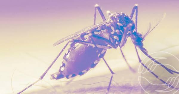 Carta da dengue