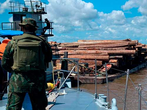 1000 logs of illegal wood seized at the mouth of the Tocantins